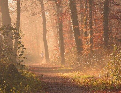 Attraktiver Herbst: Joggen oder Walken auf Münchens schönsten Strecken